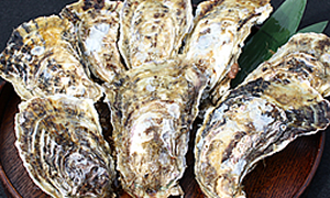 恵比須牡蠣 1kg(8~9個)
