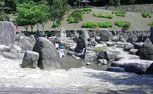 昭和の森 一本松公園
